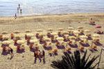 spiaggia<br>di Cupra Marittima